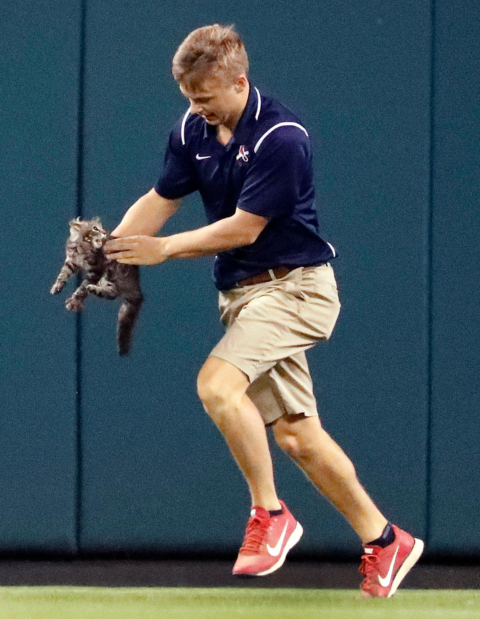 A member of the Busch Stadium grounds crew removes a cat that had run onto the field during the sixth inning of a baseball game between the St. Louis Cardinals and the Kansas City Royals on Wednesday, Aug. 9, 2017, in St. Louis. (AP Photo/Jeff Roberson)