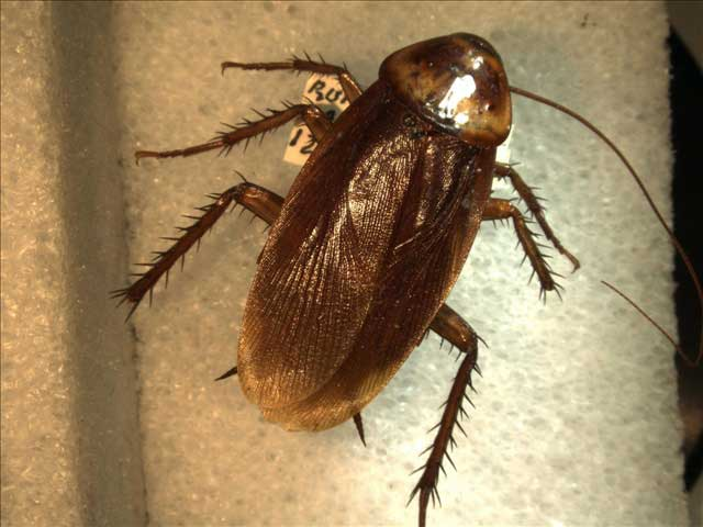 Roaches beat out Congress 44 to 42 percent.