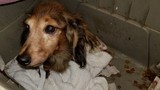 Animals removed from Florence County puppy mill