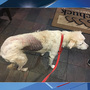 Dog found abused, abandoned along popular hiking trail in Snohomish County