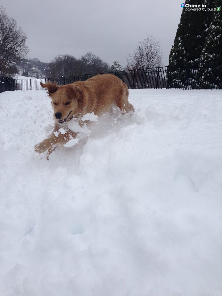 SNOW DAY! Only thing better than (possibly) getting the day off work, is seeing the joy in your pet's eyes as they prance around the fluffy white stuff. We asked for a photo of your pets in the snow, and BOY did you deliver! Check out these images of pups throughout the DMV having the best darn day of their lives! (Image: Courtesy{ }Marci L Marshall)