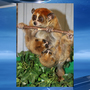 Zoo welcomes pair of pygmy slow loris babies