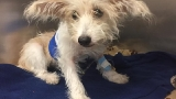 Dog thrown from window during domestic dispute on the road to recovery