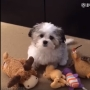 Video: A dog double crosses his best friend for pizza