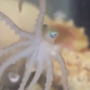 Virginia Aquarium shares video of baby octopus grabbing some breakfast