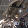 Florida Museum of Natural History adds new exhibit for 100th anniversary