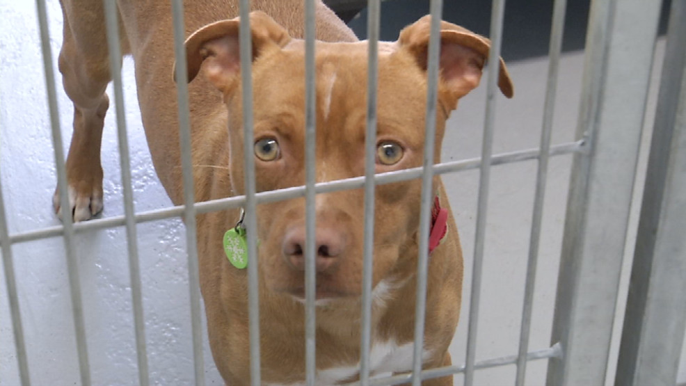 New Group Takes Over City Owned Pet Adoption Facility Kabb
