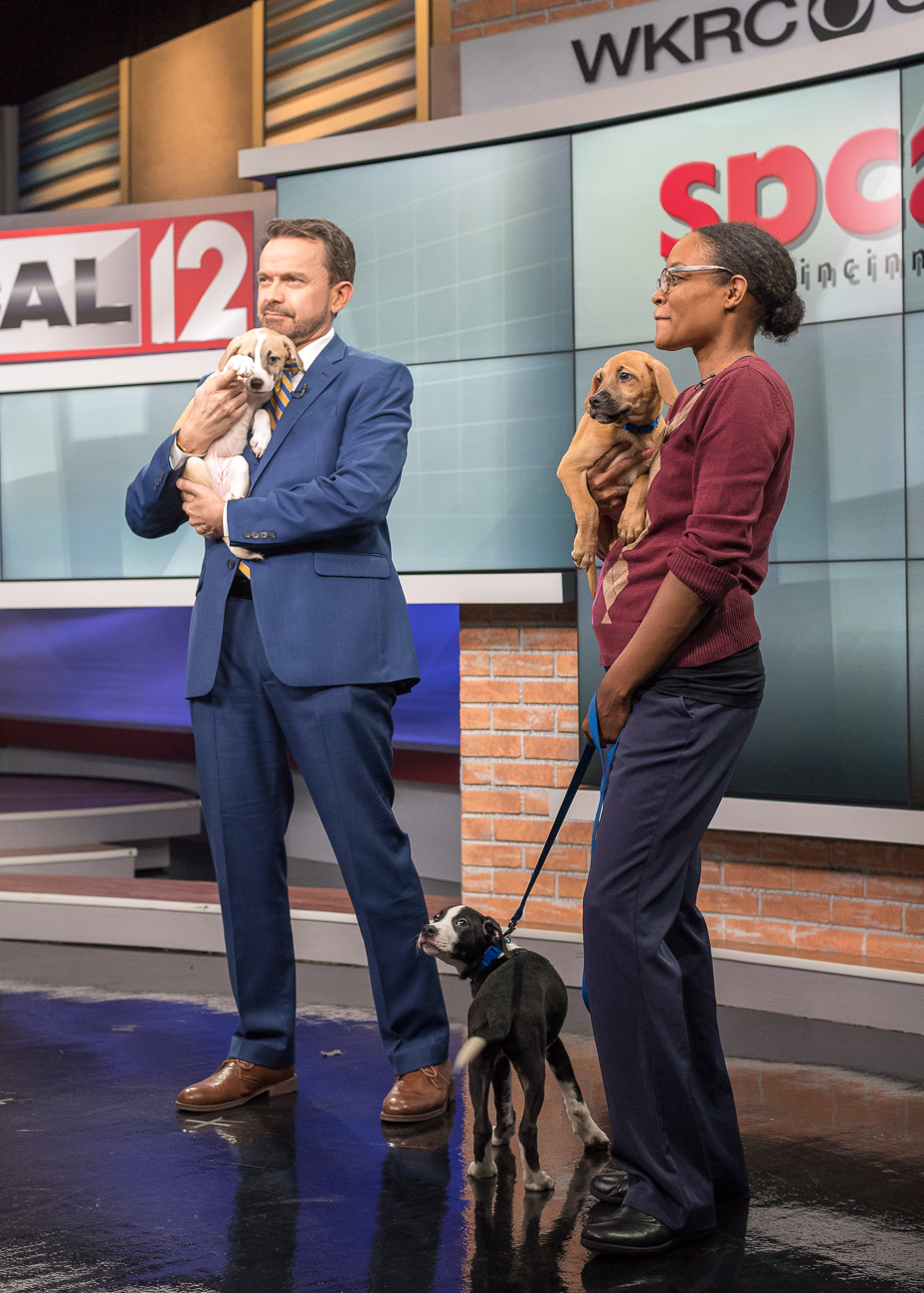 PICTURED: Paul Poteet, Local 12 meteorologist, holding Margot; Nyketa Gaffney, Public Information Officer for the SPCA, holding Nano; and Pickle standing with a leash / ABOUT: The Society for the Prevention of Cruelty to Animals (SPCA) is an organization that seeks out new, loving owners for adoptable, adorable dogs and cats. While the pets in these photos are likely already adopted by the time this is published, you can find other dogs and cats like them by visiting SPCAcincinnati.org. The organization receives new animals often; Local 12 WKRC-TV features several of those pets every Tuesday on their morning and evening broadcasts and every Saturday during the morning broadcast. / Image: Phil Armstrong, Cincinnati Refined // Published: 10.24.18