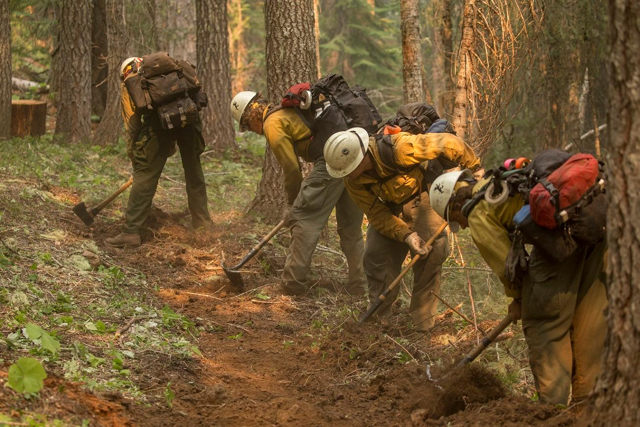 Firefighters construct handline during wildfires on the Umpqua National Forest in 2017. (Photo by Kari Greer, courtesy of the U.S. Forest Service)<p></p>
