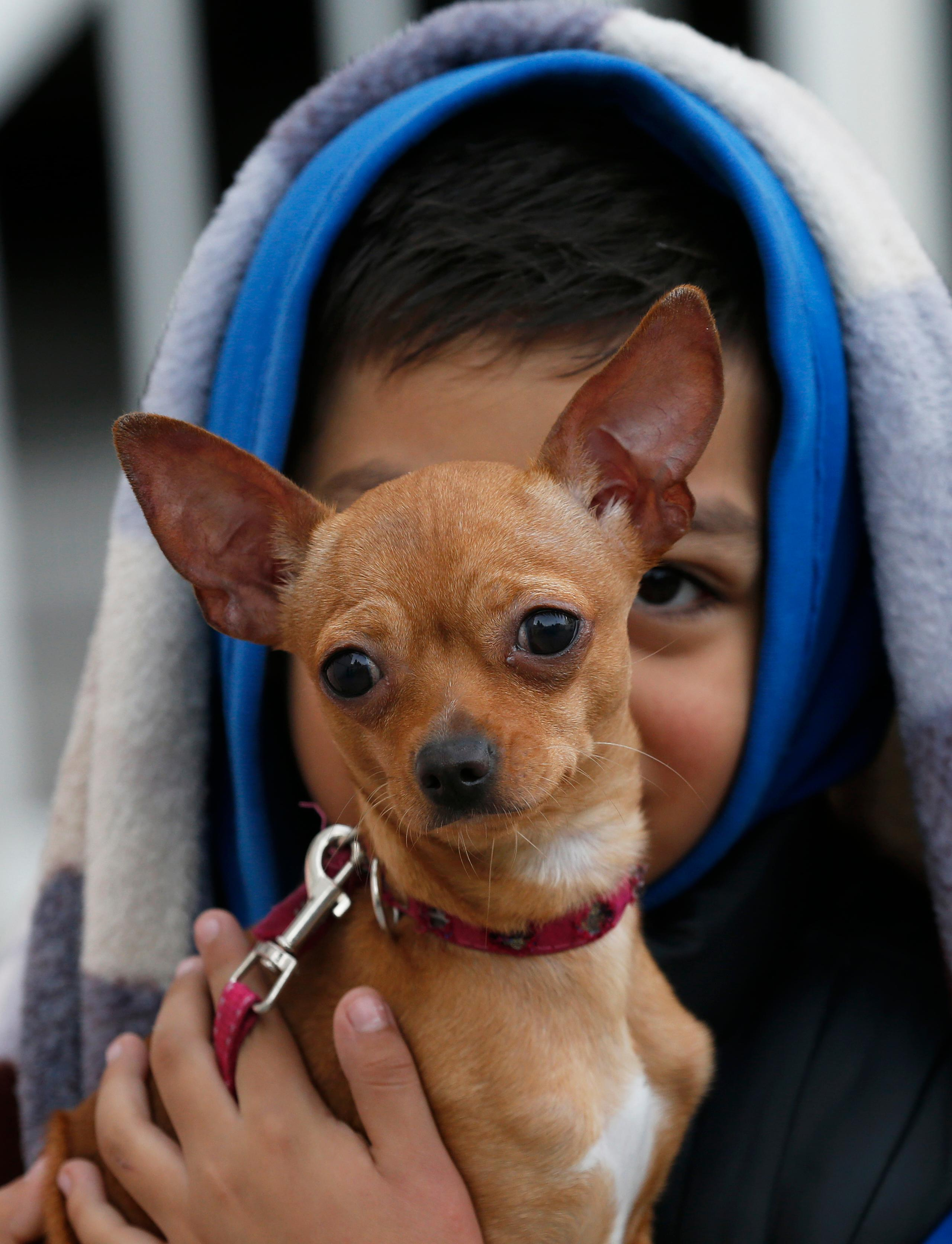 Absel Salazar holds his Chihuahua Luly after fleeing his home in response to an earthquake alarm, in Mexico City, Saturday, Sept. 23, 2017. A strong aftershock rolled through Mexico City, Saturday morning, swaying buildings and sending some people running into the street.(AP Photo/Marco Ugarte)