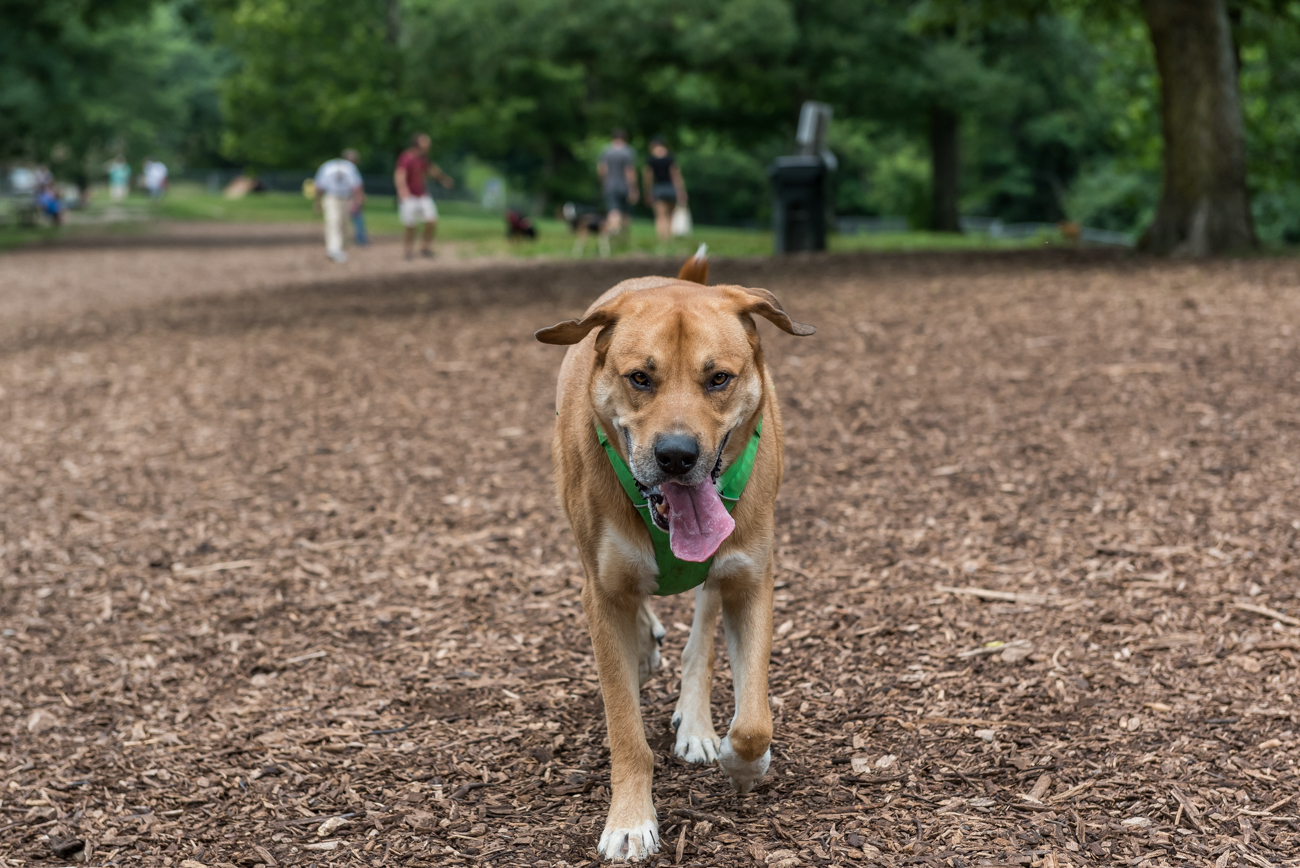 The Doris Day Dog Park is two acres and is considered one of the best in the city. / Image: Mike Menke // Published: 8.1.18