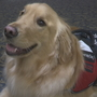 Therapy dog named 'Buddy' comforts guests at Smithfield funeral home