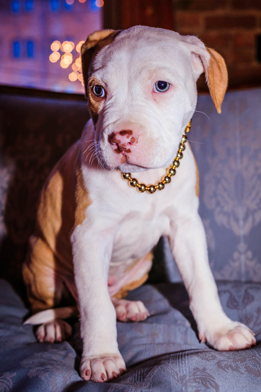 "Pictured: Baby Bleu, the unofficial mascot of Rosedale OTR / Story: ""OTR's Rosedale Is One Half Snazzy Bar And One Half Legendary Patio That Everyone Loves"" / Image: Amy Elisabeth Spasoff // Published: 2.2.18"
