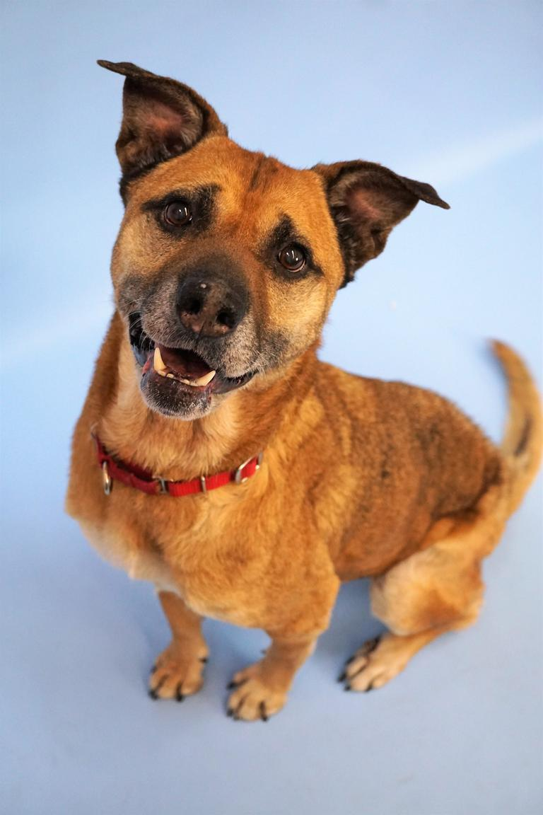 Hello! I'm Laurie, an eight-year-old Labrador mix ready for a home! I've got lots of energy to go on walks and meet new people. I'd love to be the center of your attention in a quiet home with lots of room for us to play together. Come meet me today!<p></p>