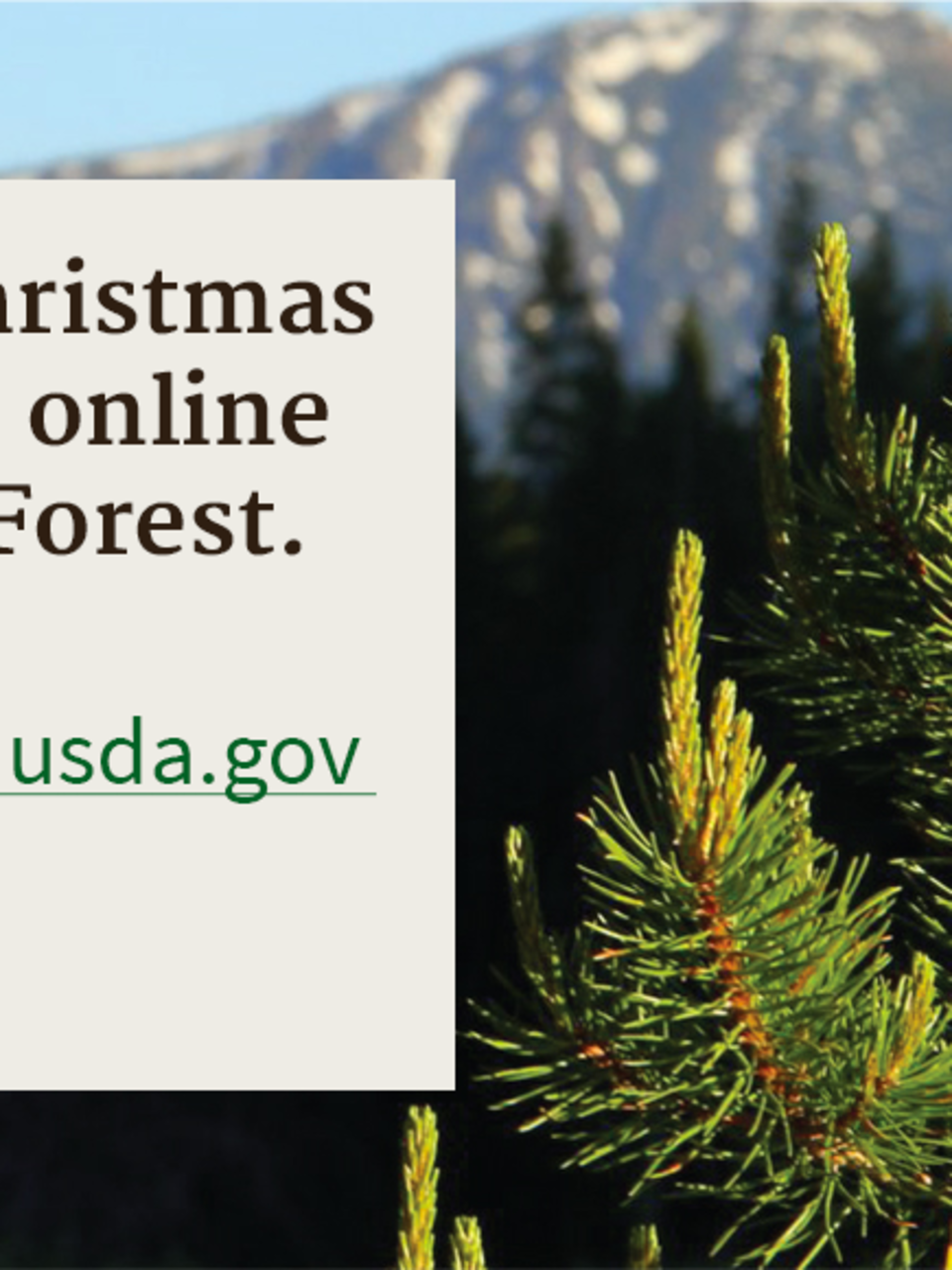 Permits to cut Christmas trees from
