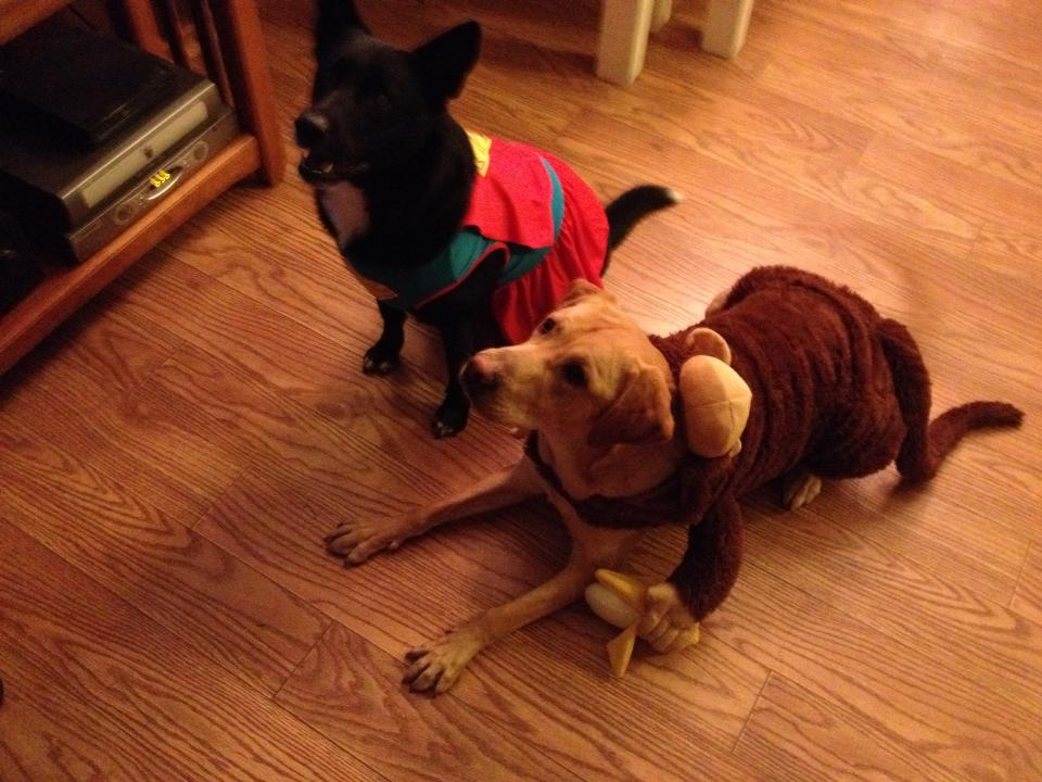 Donkey Kong and Super T ready for action on Halloween!