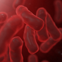 Health department says Shigellosis cases under control in Callaway County