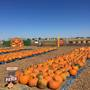 Maxwell's Pumpkin Farm celebrates 10 years